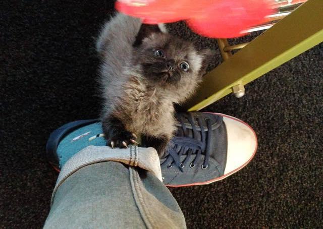足にしがみつく子猫