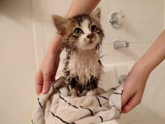 奇麗になった子猫
