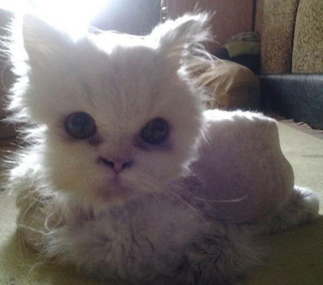 こちらを気にする猫