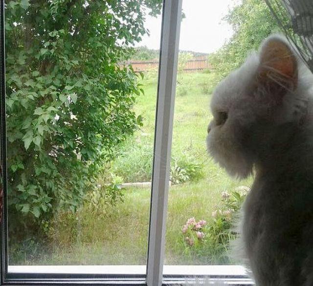 窓の外を見る猫