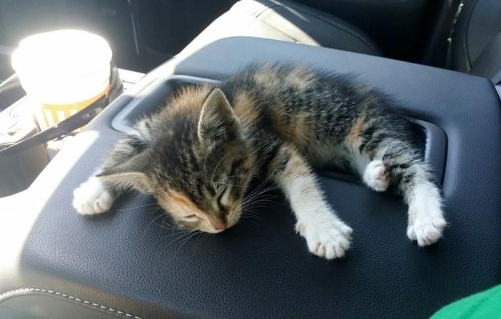 道路の真ん中で拾った子猫