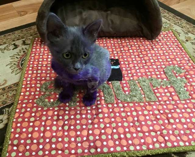 紫色の子猫