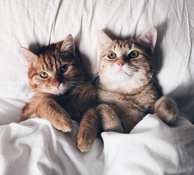眠る時も一緒の猫