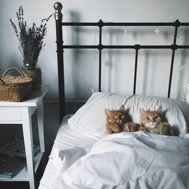 ベッドに一緒に入る猫