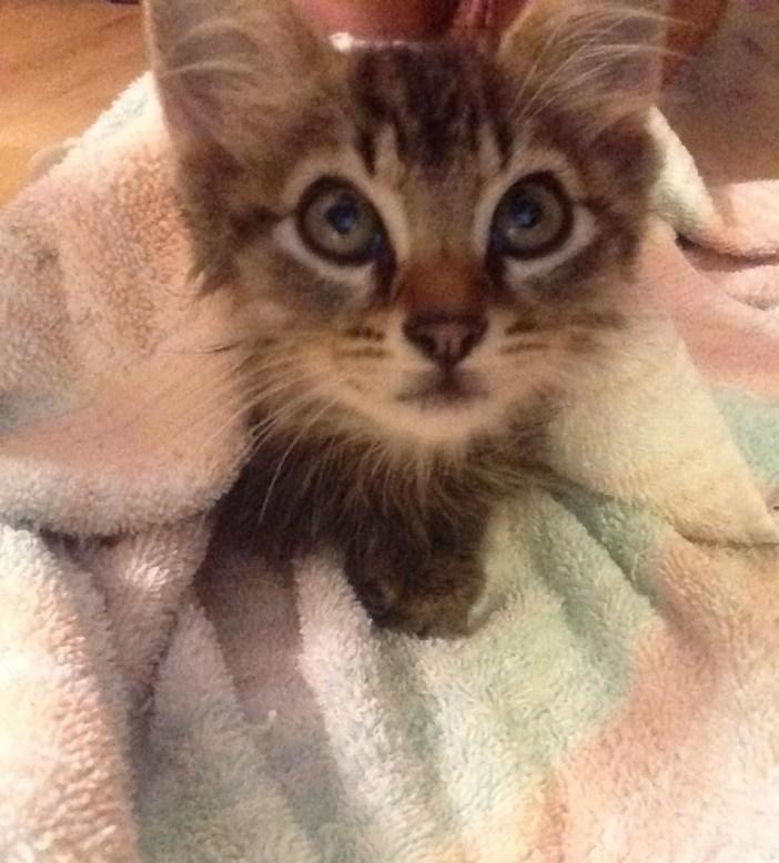こちらを見上げる子猫