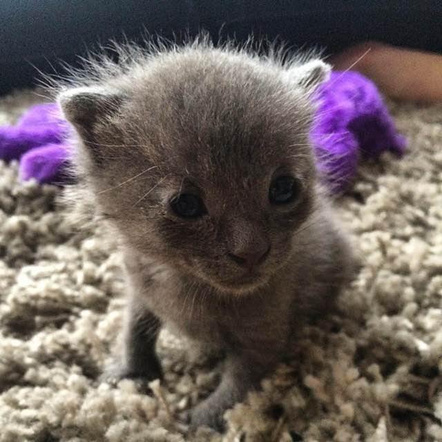ヨチヨチ歩きの子猫