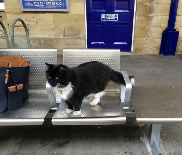 ベンチに座る駅猫