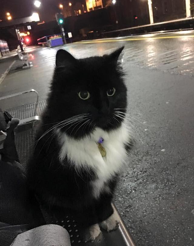 じっと見てる駅猫