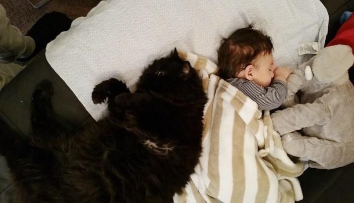 幸せそうに眠る赤ちゃんと猫