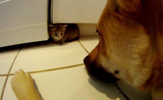 犬を見る子猫