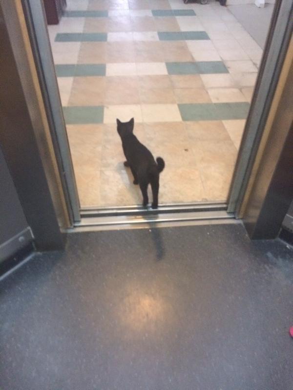エレベーターに乗ってきた猫