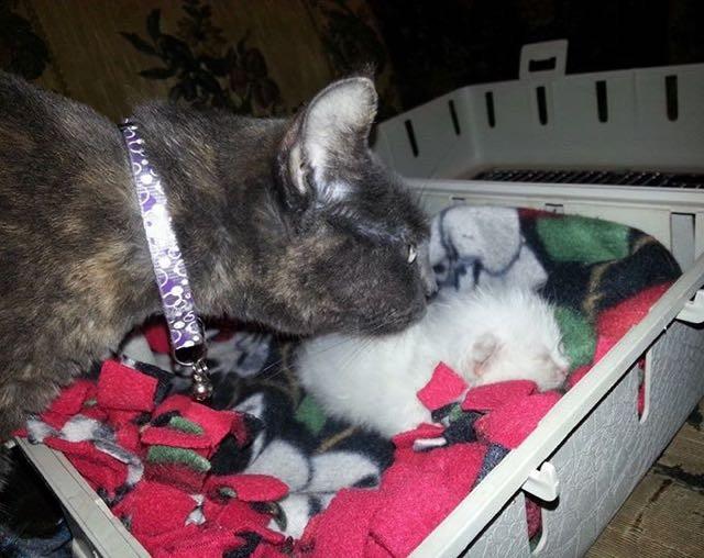 猫に看病される子猫