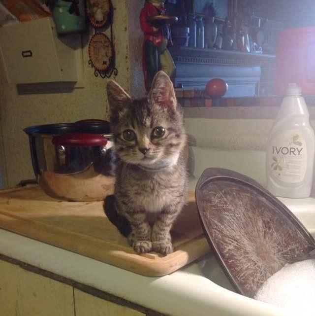 ちょこんと座る子猫