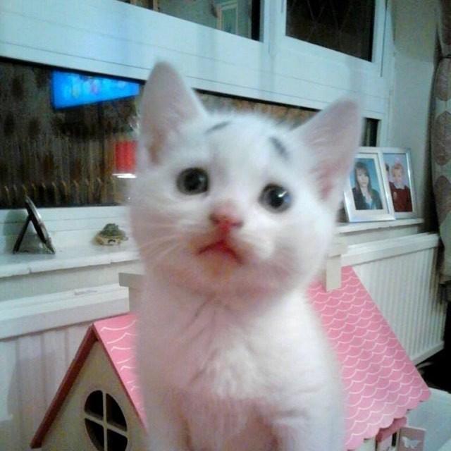 持たれる困り顔の猫