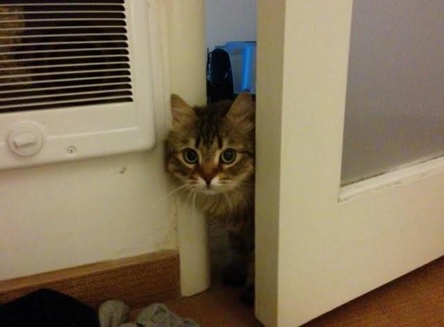 間をひょっこり出す猫