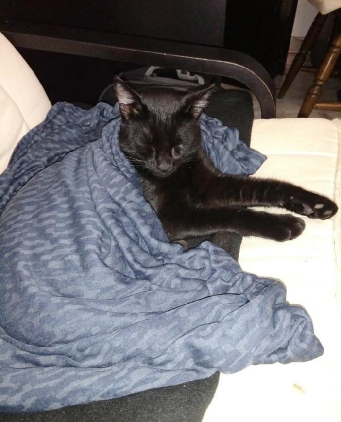 布団をかけられた子猫