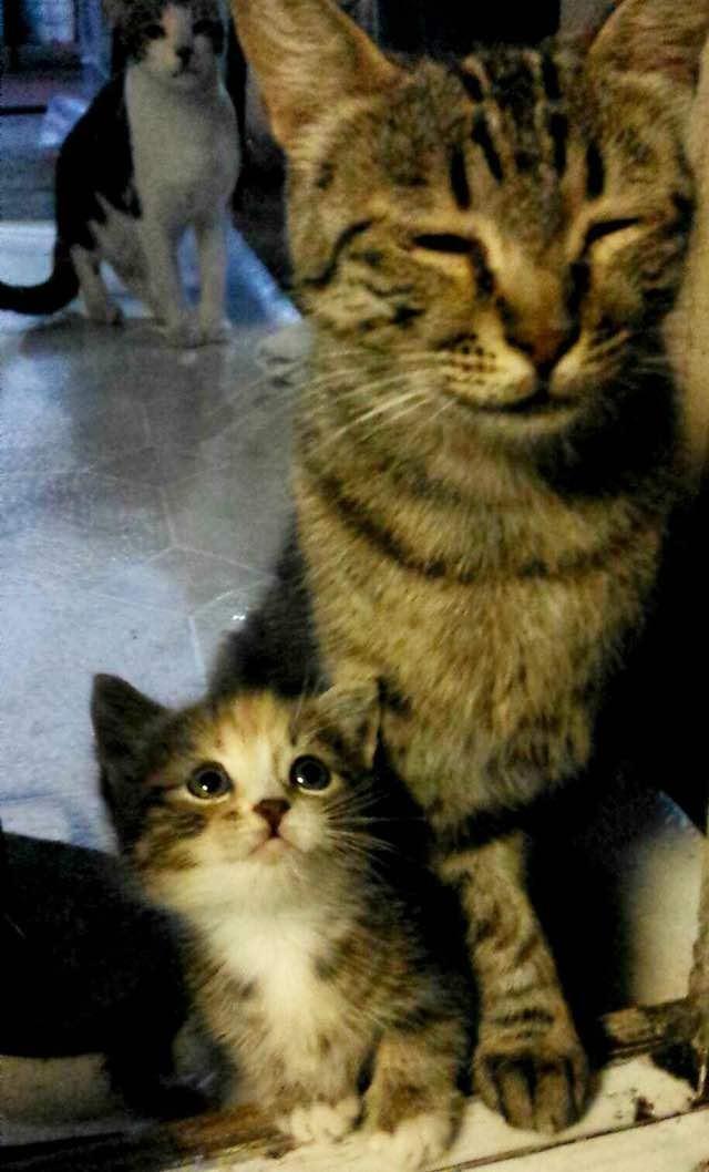 お母さんを見上げる子猫