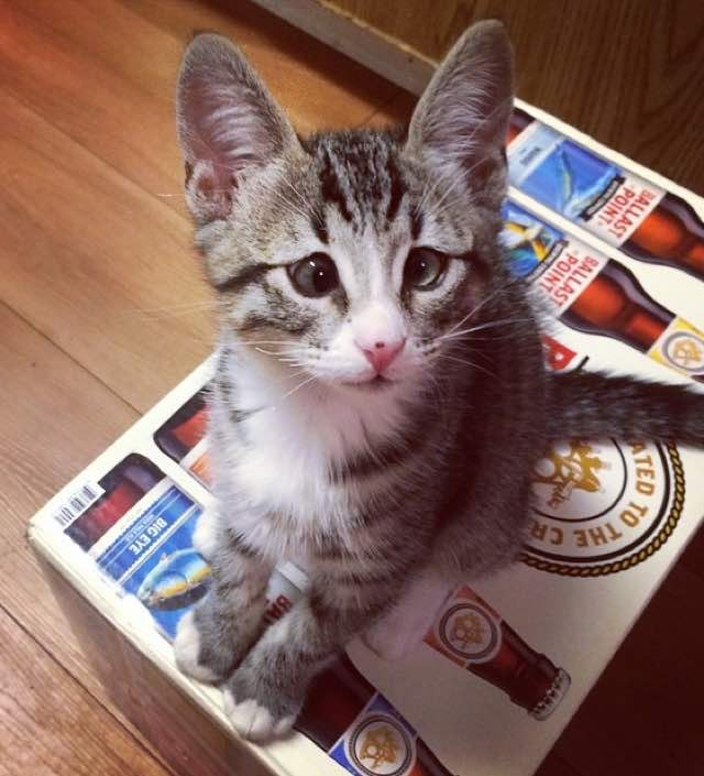 箱が大好きな子猫