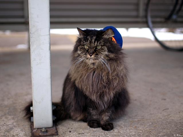 猫駅長ばす