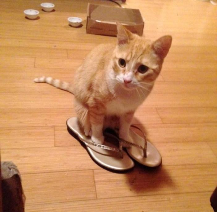 サンダルで遊ぶ猫