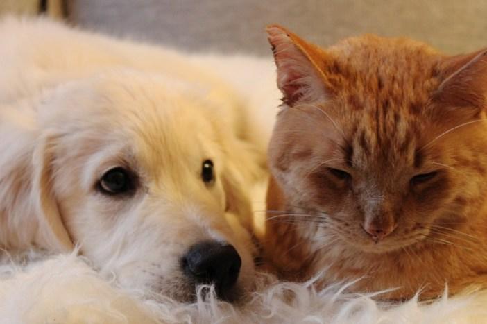 いっしょにまったりする犬と猫
