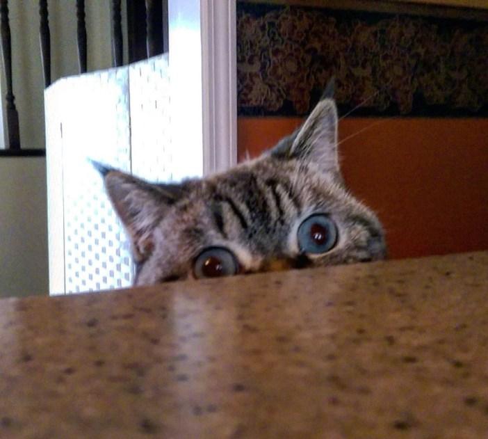 テーブルの下からチラッと覗く猫