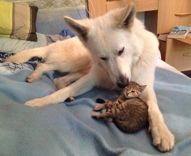 猫を迎える犬