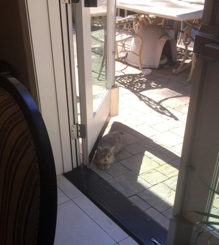 ドアの前まで近づいてきた猫