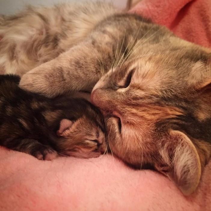 いっしょに眠る母猫と子猫