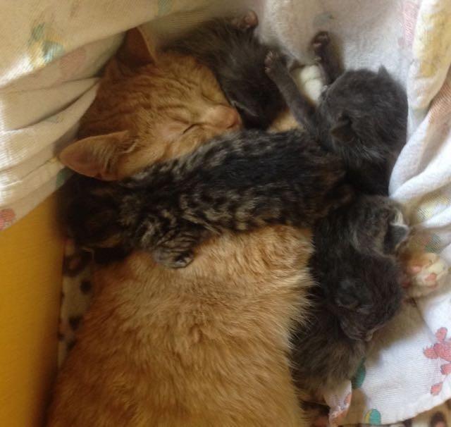 ギュウギュウな父と子猫