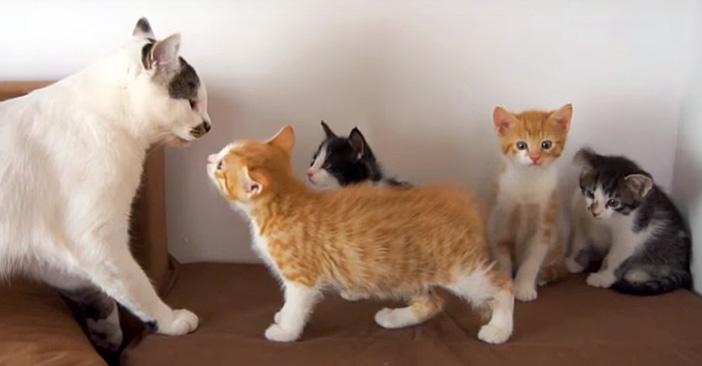 first_cat_title