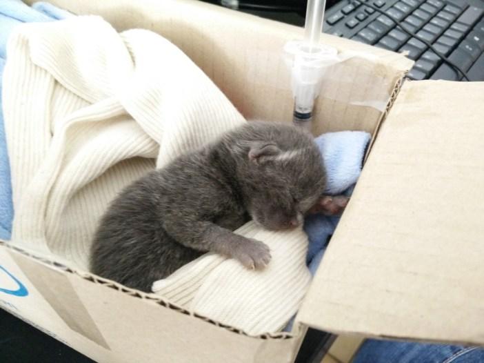 ゴミ箱に捨てられていた子猫