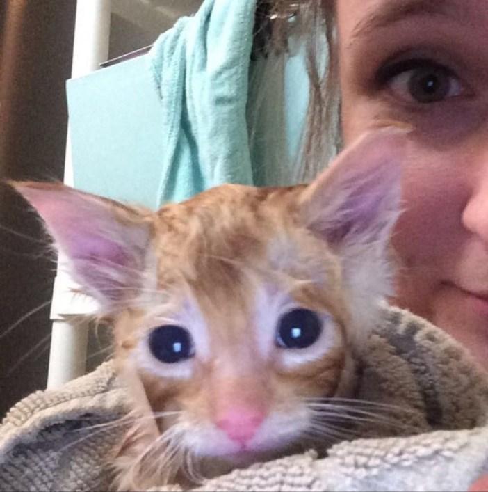 お風呂に入った子猫