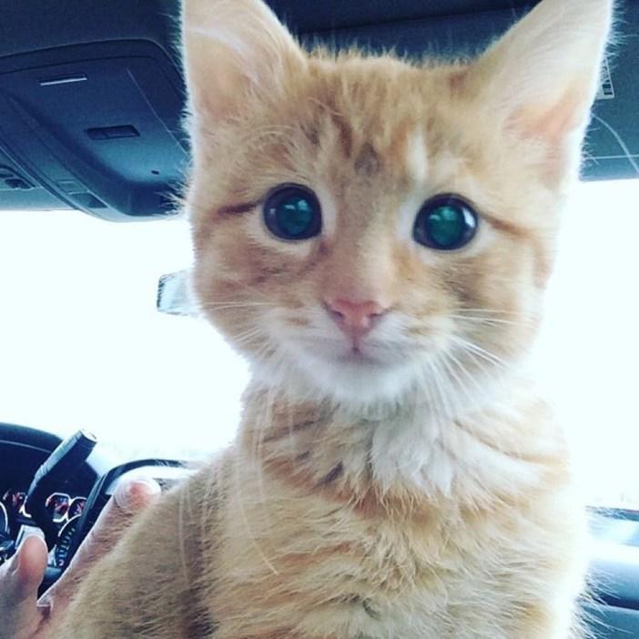 スマイル子猫