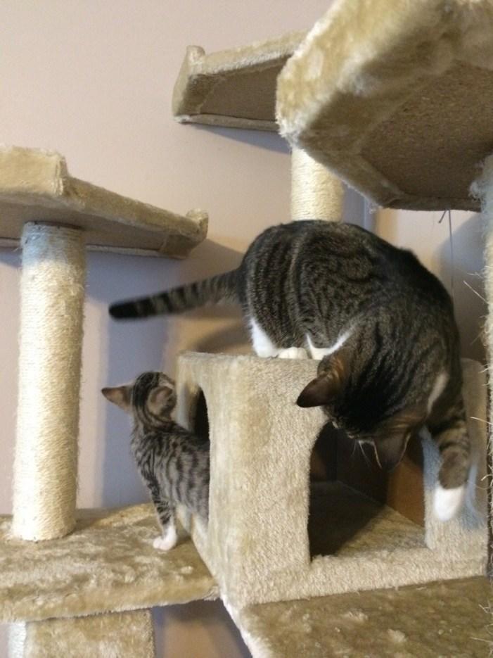 一緒に遊ぶ猫の親子