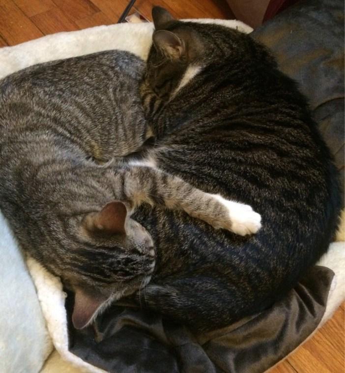 いっしょに眠る猫の親子