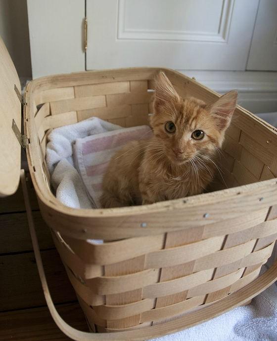 新しい家を手に入れた子猫