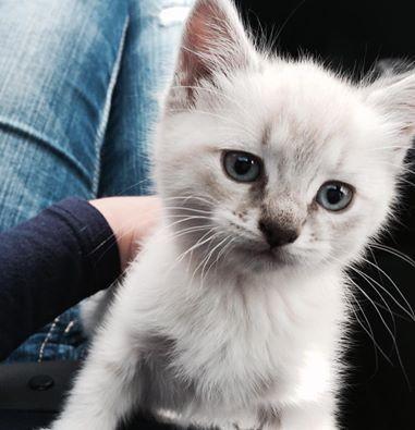 子猫を採用