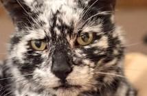 猫のスクラッピー