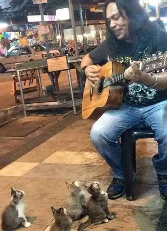 歌を聴く子猫