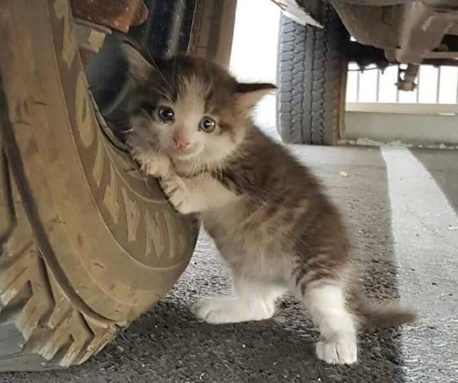 タイヤにしがみつく子猫