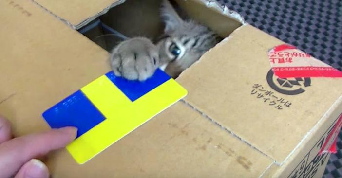 カードも預かる猫