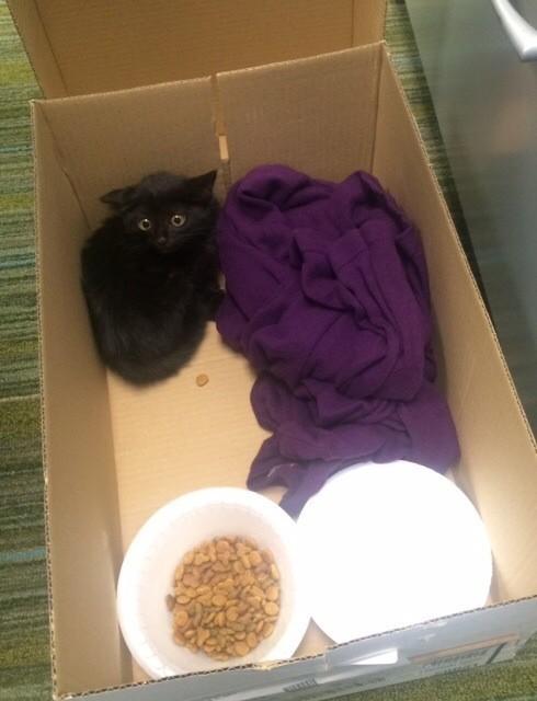 ダンボールの中の黒猫