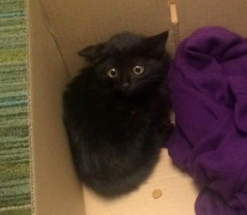 こちらを見上げる黒猫