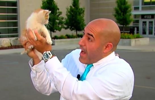 生放送中に子猫を保護