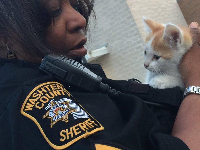 警察と子猫
