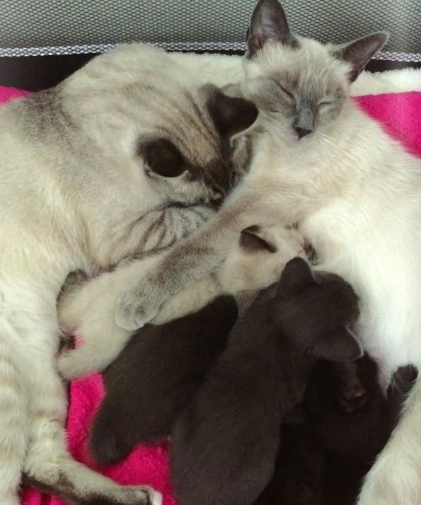 いっしょの猫の家族