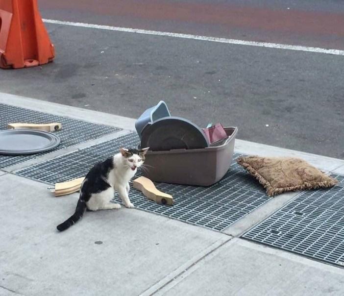 ペット用品といっしょに捨てられた猫