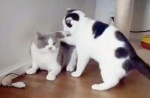 ゆるい猫のケンカ