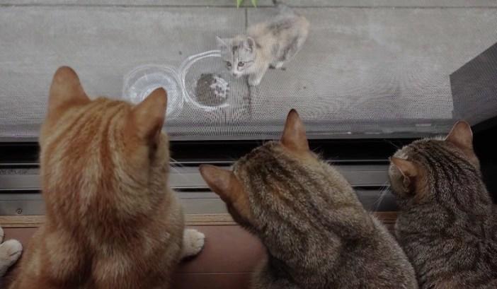 ご飯を食べる野良猫